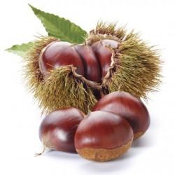 Atmos Lab Chestnut Flavour 10ml