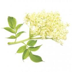Atmos Lab Elder Blossom Flavour 10ml