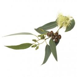 Atmos Lab Eucalyptus Flavour 10ml